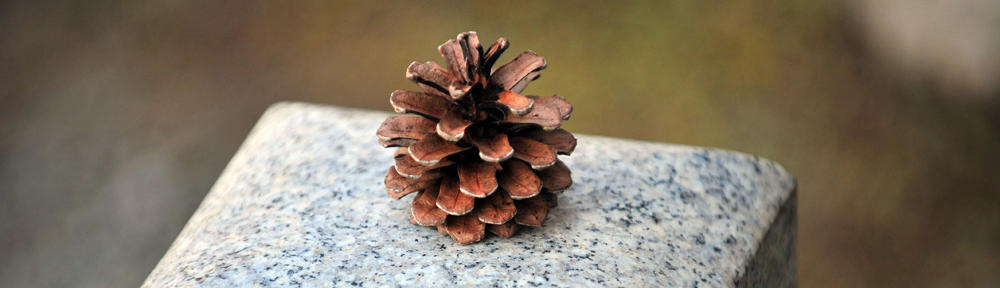 Photograph of a pine cone in residential landscape design by Naturescape Designs landscape designer